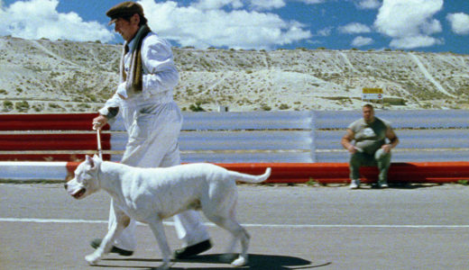 柴犬にコーギーも!愛すべき犬・わんこに思いっきり癒されるおすすめ映画15選